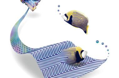 Rayures surprenantes: les motifs de Turing relient les poissons tropicaux à la croissance des cristaux de bismuth