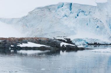 Adélie Penguins Antarctica