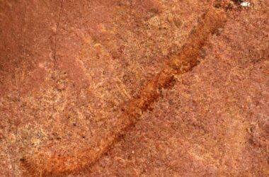 Palaeoscolecid Fossil