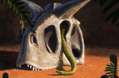 Modern Snakes Evolved From Few Survivors