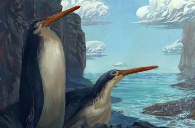 Manchot géant de Waikato : des écoliers néo-zélandais découvrent de nouvelles espèces