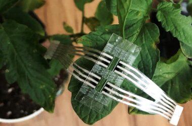 Plant Patch permet une surveillance continue du stress et des maladies des cultures