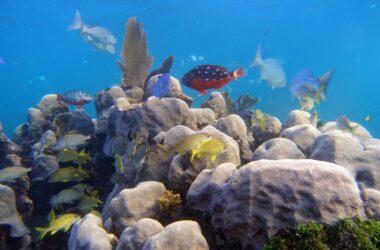Le microbiome corallien (bactéries, champignons et virus) est la clé pour survivre au changement climatique