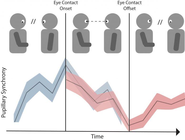 Établir (et rompre) le contact visuel rend la conversation plus engageante