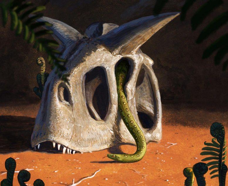 Les serpents modernes ont évolué à partir de quelques survivants