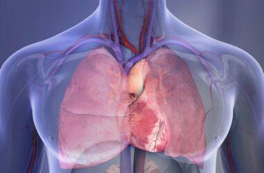 Heart and Lungs Illustration