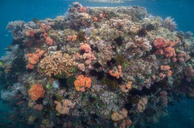 Corals Verde Island Passage