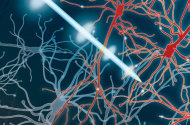 Pulsed Electrical Stimulation Drives Neuromodulation