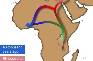 Revisiter la théorie hors de l'Afrique: un nouveau récit issu de l'analyse génétique et de l'IA
