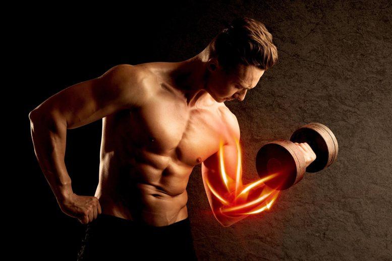 Musculation Musculation Musculation